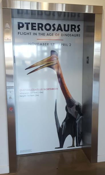 Fort Collins Museum of Discovery, Pterosaurs Exhibit Elevator Wrap