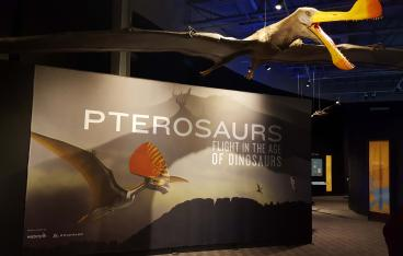 Fort Collins Museum of Discovery, Pterosaurs Fabric Wall Mural