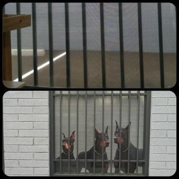 Interior and Exterior View of Window Graphics