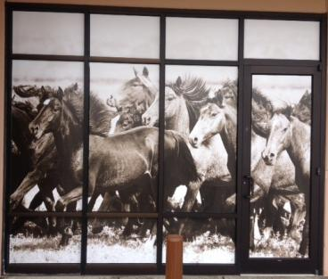 window graphics denver, CO horses multi-window