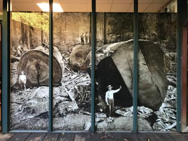 Muir Woods Ranger Station Window Mural