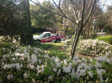 Blooms Galore