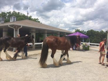 Save the Horses Charity Event - Wills Park Equestrian Center - Alpharetta, GA