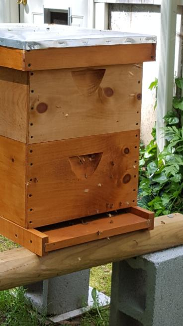 Thriving bee hive with Mosquito Control in West Greenwich