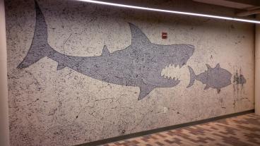 Shark Grafitti Wall Mural - Client: Fieldglass