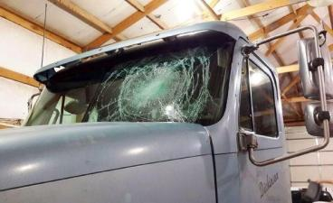Damage caused by pheasant Thumbnail