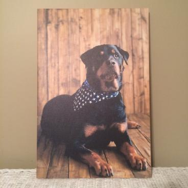 Canvas print of our Cutest Pet Contest winner!