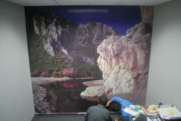 Corporate office wall Mural