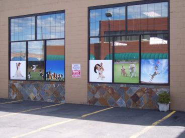 Doggy Daycare window graphics