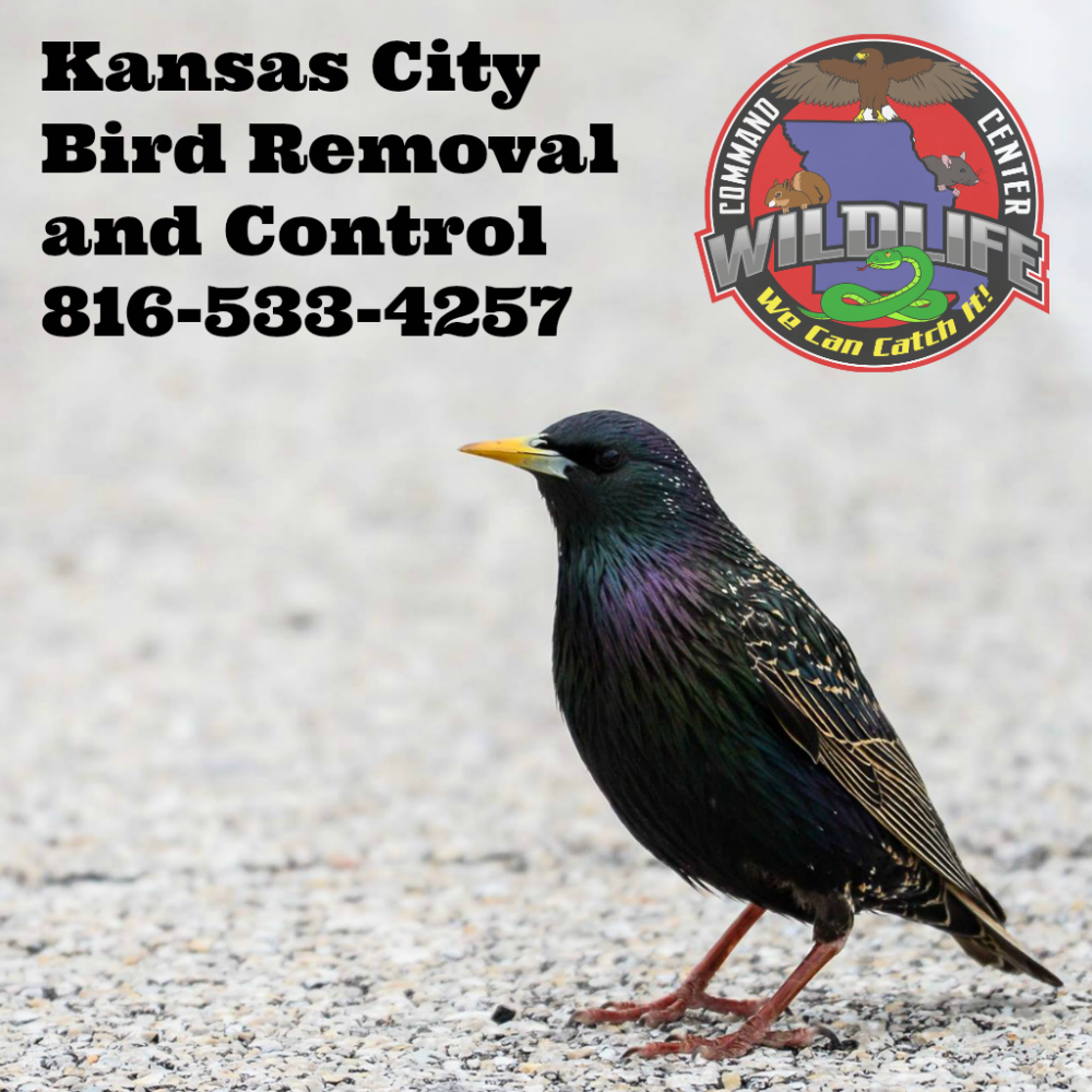 Backyard Bird Center Kansas City - House Backyards
