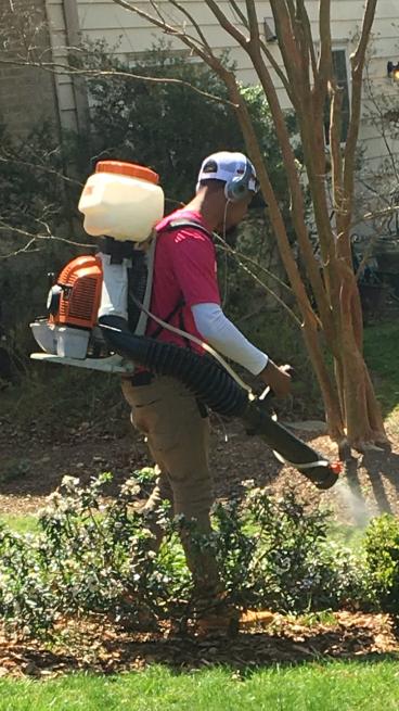 Professional mosquito treatment in Washington DC
