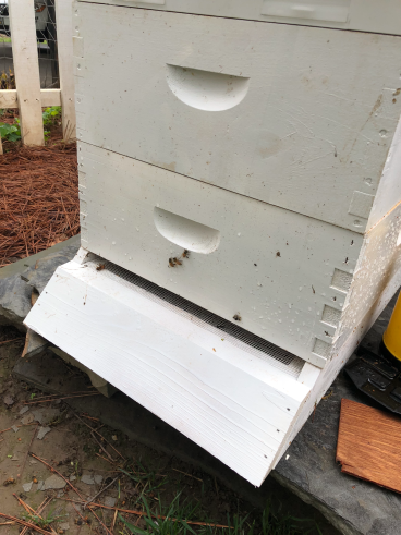 Warm and Happy Bees