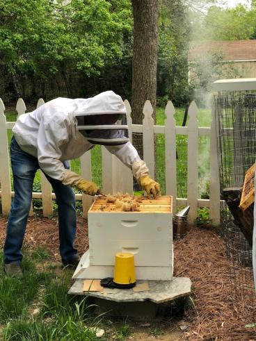 Working the Hive