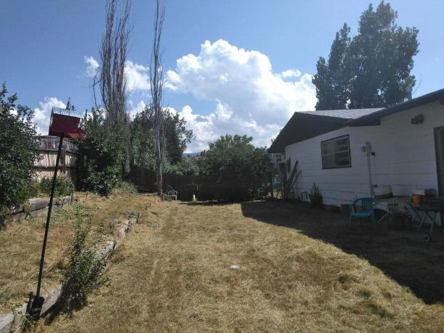 Yard Cleanup After