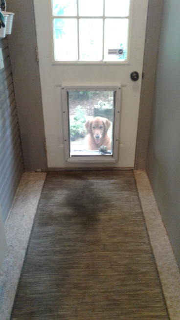 Installed Dog Door in Columbus