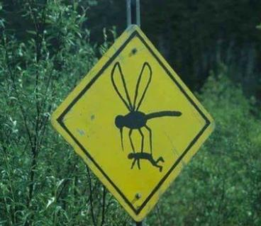 Don't let mosquitoes take you from your yard! Call Mosquito Authority!