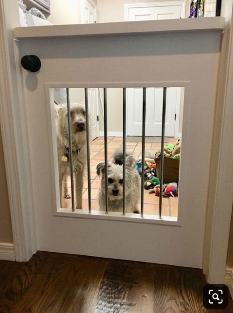 Happy Dogs in the Huntersville,  Northstone Club Neighborhood
