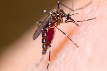 Staying informed/being proactive about mosquito protection is the best way to keep your family safe