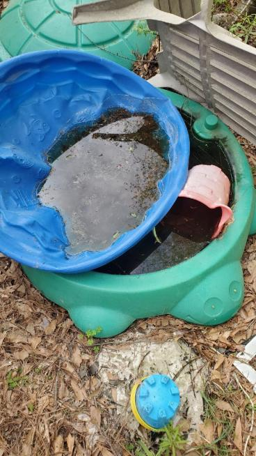 Child's Sand Box breeding thousands of mosquitoes.
