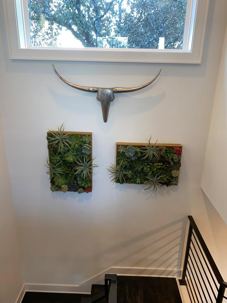 Mounted Succulent Wall and Longhorn