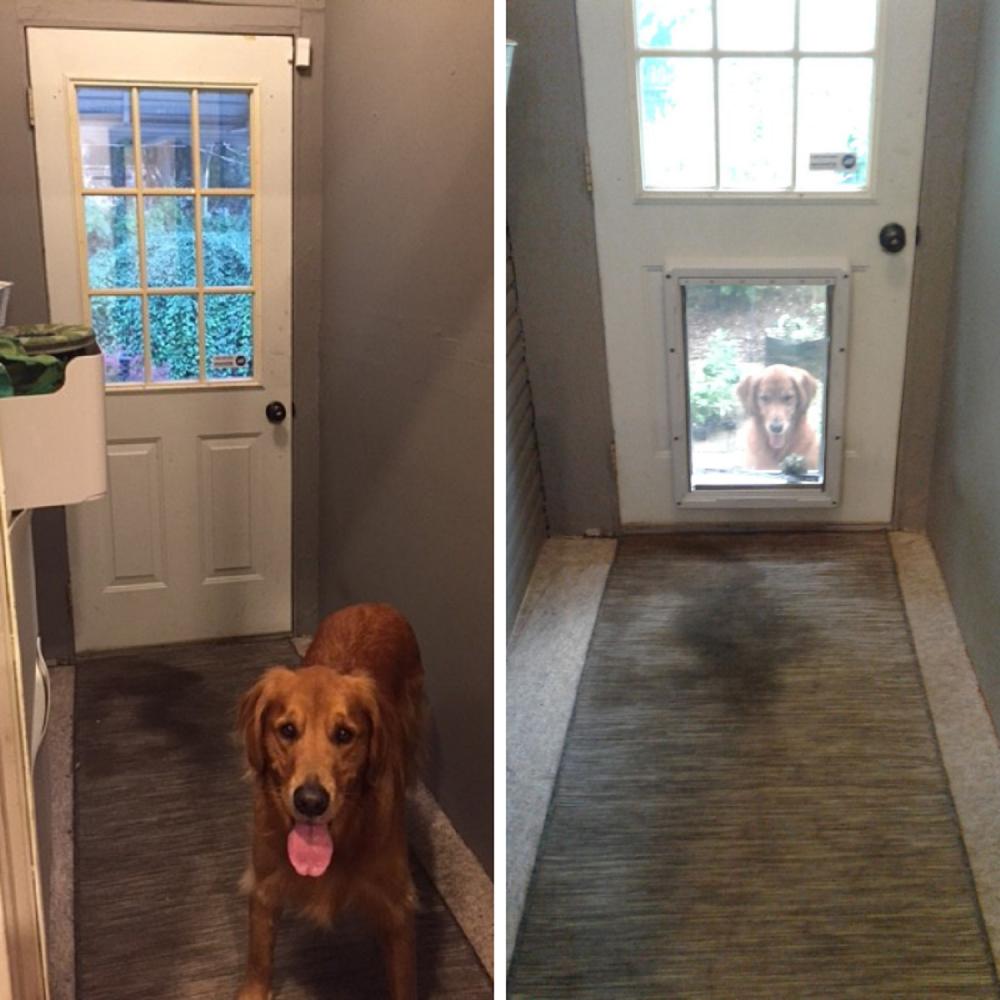 Installed Dog Door in Columbus