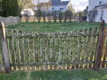 Fence in dire need of cleaning located in Dover