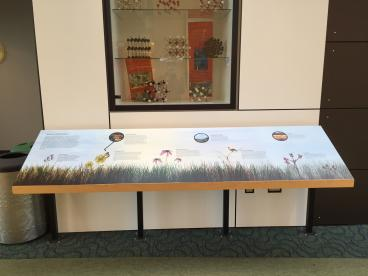 Wall Mural and Display - College of DuPage - Wheaton, IL